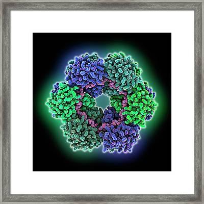Rift Valley Fever Virus Protein And Rna Framed Print by Laguna Design