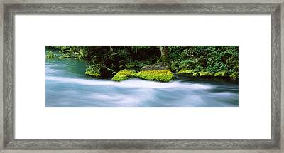 River Flowing Through A Forest, Big Framed Print