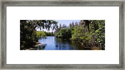 River Passing Through A Forest Framed Print by Panoramic Images