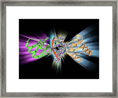 Rna-editing Enzyme Framed Print