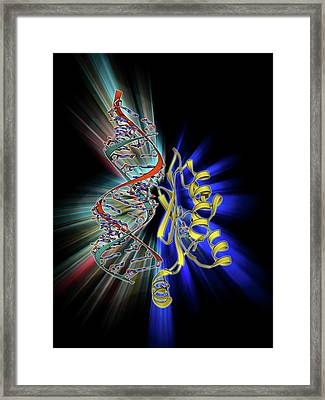 Rna Interference Viral Suppressor And Rna Framed Print by Laguna Design