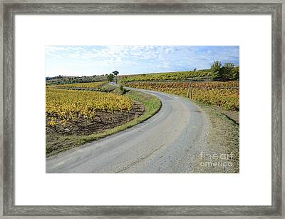 Road By Vineyards With Fall Foliage Framed Print by Sami Sarkis
