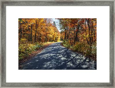 Road In Fall Forest Framed Print