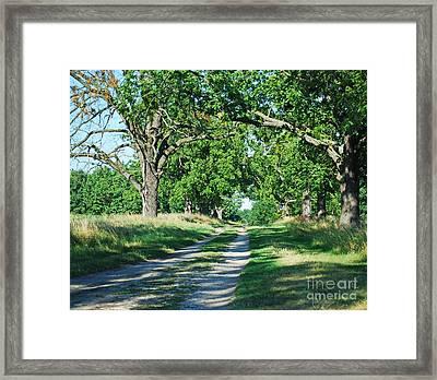 Road Framed Print by Sarka Olehlova