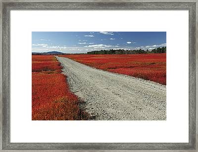 Road Through Autumn Blueberry Maine Framed Print by Scott Leslie