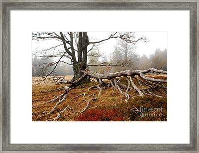 Rootage Framed Print by Karin Stein