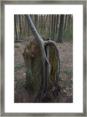 Rooted Down  Framed Print by Eugene Bergeron