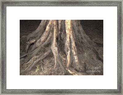 Roots Framed Print by Cassandra Buckley