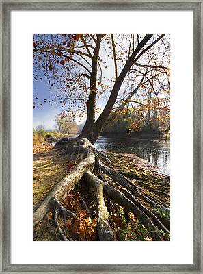 Roots Framed Print by Debra and Dave Vanderlaan