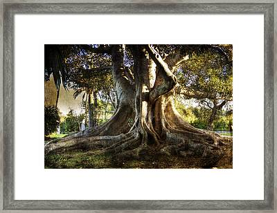 Roots Framed Print by George Lenz