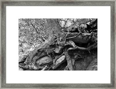 Roots Of Life Framed Print by David Lee Thompson
