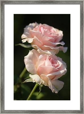 Rosa 'johann Strauss' Flowers Framed Print by Maria Mosolova