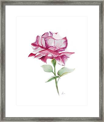 Rose 2 Framed Print by Nancy Edwards