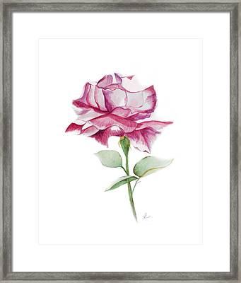 Rose 2 Framed Print by Nancy Edwards