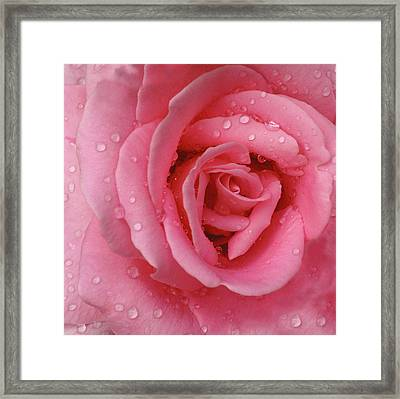 Rose Abstract Framed Print by Anna Miller