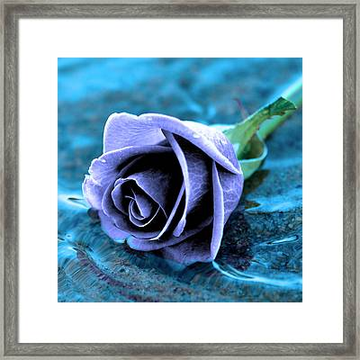 Rose In Water  Framed Print