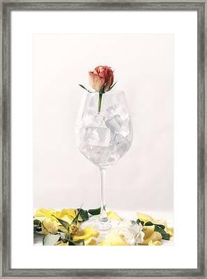 Rose On The Rocks Framed Print