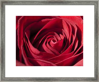 Rose Red Framed Print by Tara Lynn