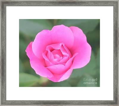 Rose. Framed Print by Sylvia  Niklasson