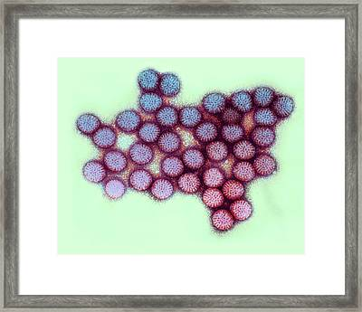 Rotavirus Particles Framed Print by Ami Images/dr. Erskine Palmer