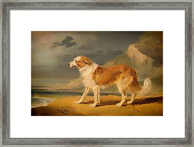 Rough-coated Collie Framed Print by Mountain Dreams