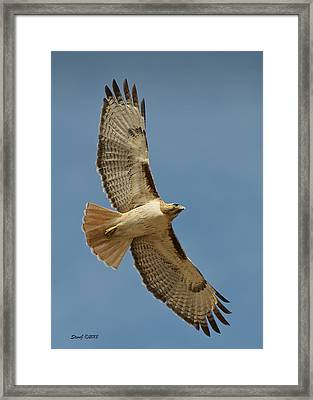Roxborough Park Road Red Tail Hawk Framed Print