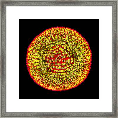 Rubella Virus Framed Print by Mehau Kulyk