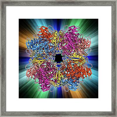 Rubisco Enzyme Molecule Framed Print