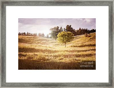 Rural Landscape With Single Tree Framed Print