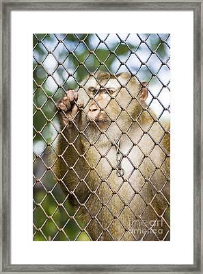 Sadness In Captivity Framed Print by Jorgo Photography - Wall Art Gallery
