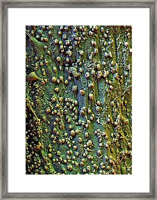 Saffron Flower Surface Framed Print by Stefan Diller