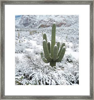 Saguaro Cactus In A Desert Framed Print