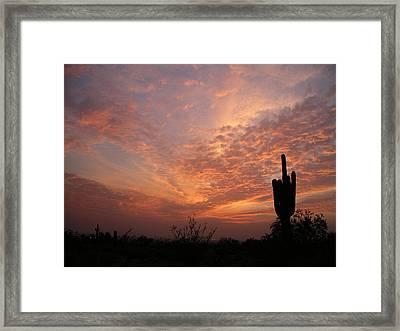 Saguaro Sunset Framed Print
