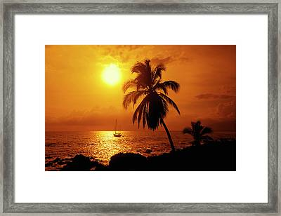 Sailboat And Palm Tree At Sunset Framed Print