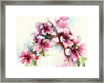 Sakura - Cherry Tree Blossom Watercolor Framed Print by Tiberiu Soos