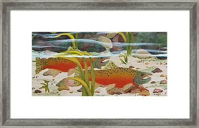Salmon Framed Print by Katherine Young-Beck