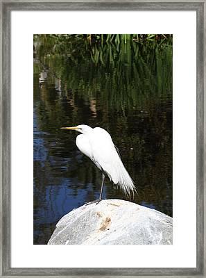 San Diego Zoo - 12122 Framed Print