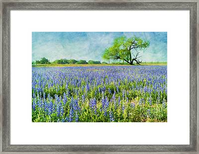 Sandy Bluebonnets Framed Print