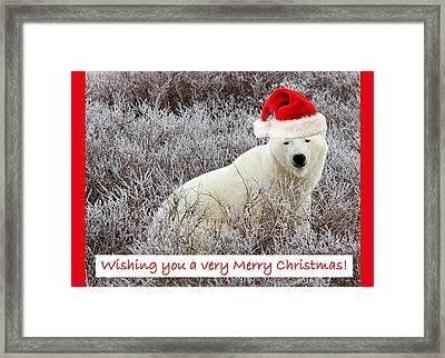 Santa Bear Framed Print by Craig Brown