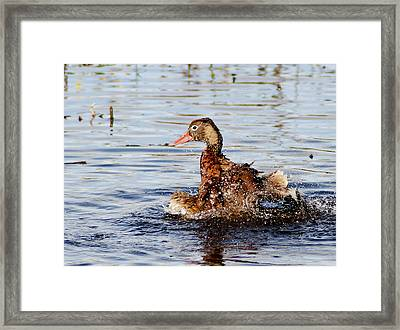 Saturday Bath 2 Framed Print by Norman Johnson