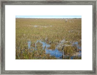 Sawgrass Prairie Framed Print