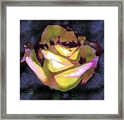 Scanned Rose Water Color Digital Photogram Framed Print