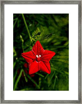 Framed Print featuring the photograph Scarlet Morning Glory by Ramabhadran Thirupattur