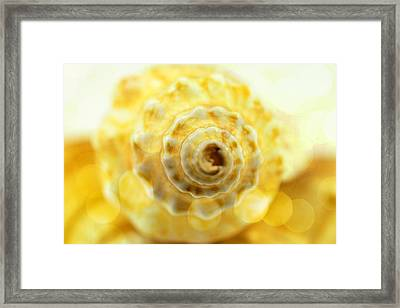 Sea Shell With Bokhe  Framed Print