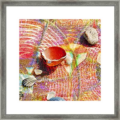 Sea Shells In A Row Framed Print