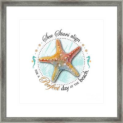 Sea Stars Align For A Perfect Day At The Beach Framed Print by Amy Kirkpatrick