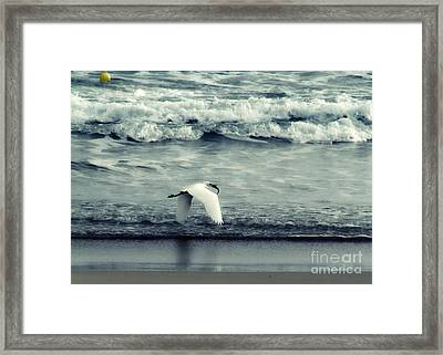 Seagull  Framed Print by Stelios Kleanthous