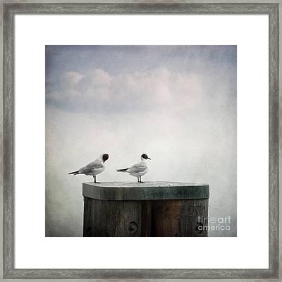 Seagulls Framed Print by Priska Wettstein