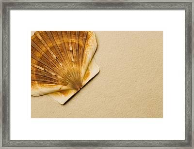 Seashell Framed Print by Darren Greenwood