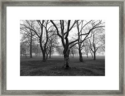 Seaside By The Tree Framed Print